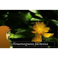 Почвопокривни растения