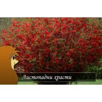 Листопадни храсти