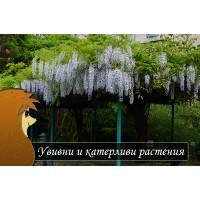 Увивни и катерливи растения