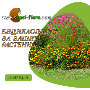Енциклопедия  за вашите  растения